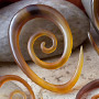Golden horn oval spirals