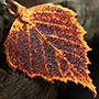 Iridescent copper plated birch leaf pendant necklace