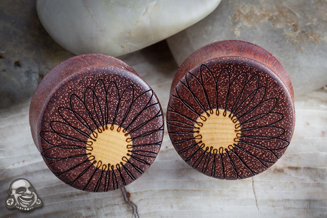Bloodwood Daisy Plugs