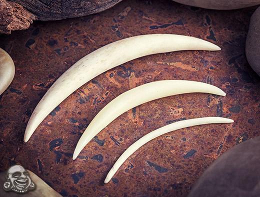 Basic Organic Septum Tusk In Horn Or Bone