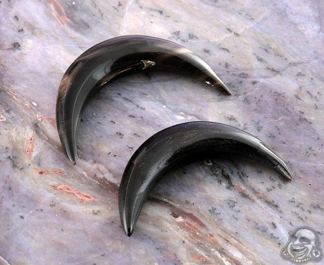 Blach horn septum tusk (single)