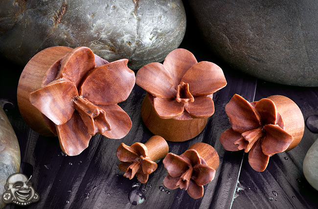 Sabo Wood Orchid Plugs