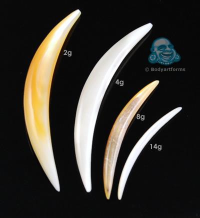 Shell Septum Tusk