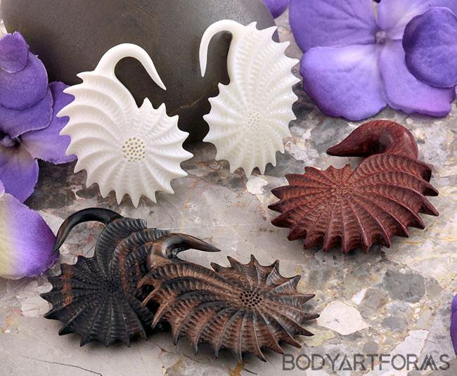 Mollusk Design